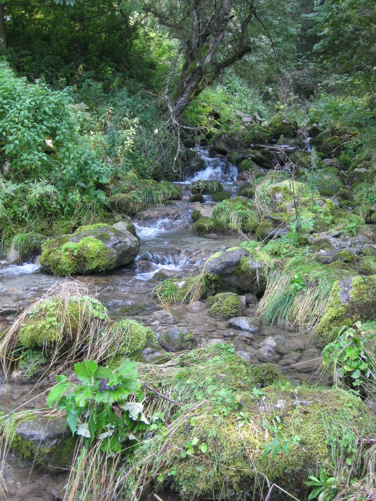 Ruisseau en forêt.